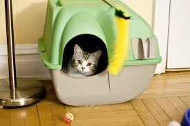 What Can Be Done About Cat Box Accidents
