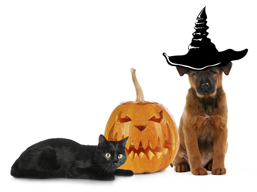 Halloween Pet Safety Tips for Your Dog and Cat